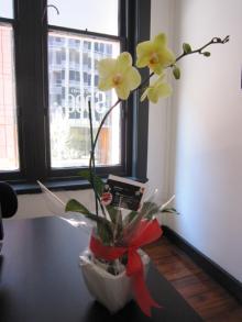 Design Life in Sydney-SPEC Design College オープニングお祝い8